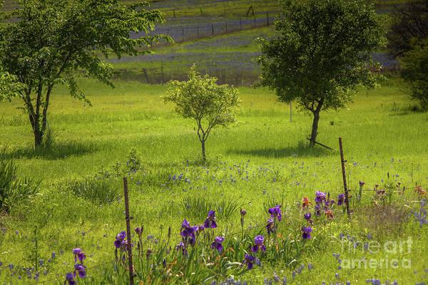 Wall Art - Photograph - Purple Irises by Iris Greenwell