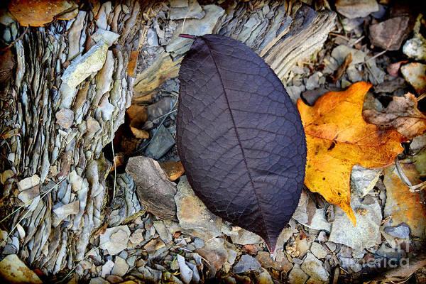 Photograph - Purple Leaf In Autumn by Karen Adams