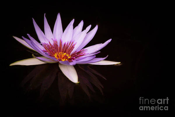 Photograph - Purple Light by Sabrina L Ryan