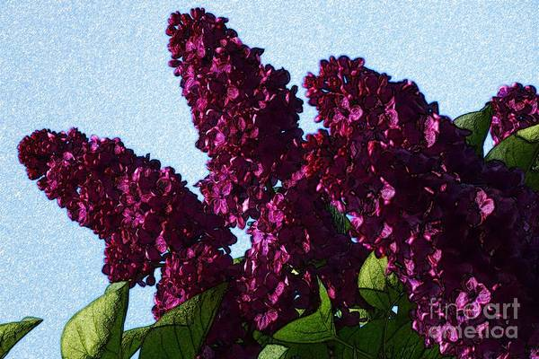 Digital Art - Purple Lilac 3 by Jean Bernard Roussilhe