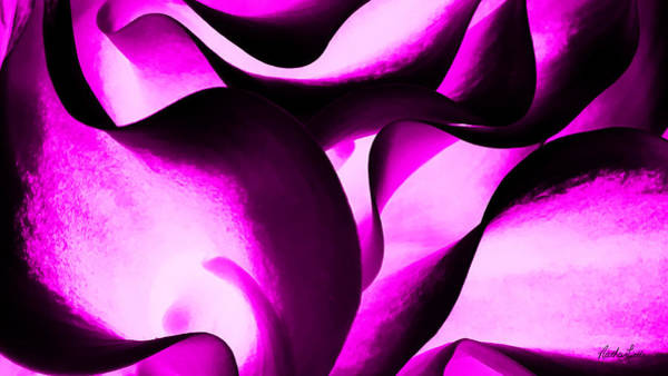 Photograph - Purple Lilies by Nathan Little