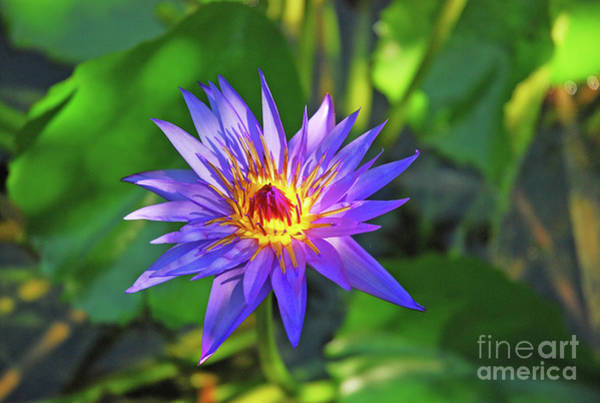 Wall Art - Photograph - Purple Magic by Robert Anschutz