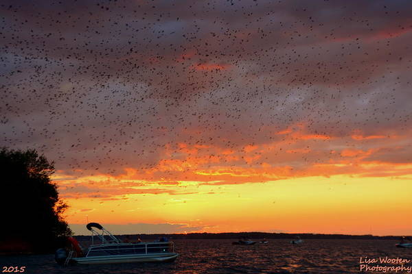 Purple Martin Sunset On Lake Murray Sc Art Print
