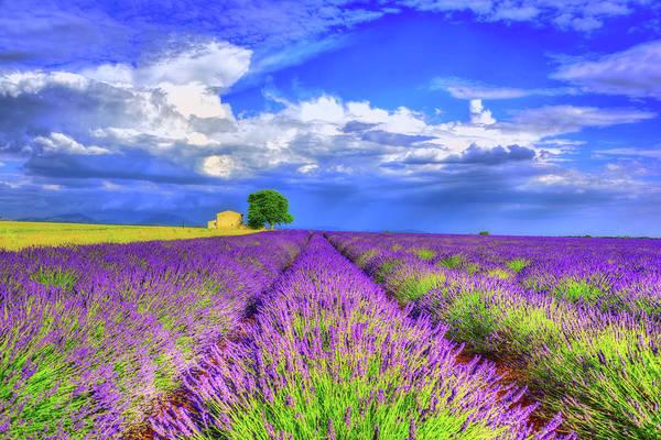 Wall Art - Photograph - Purple by Midori Chan