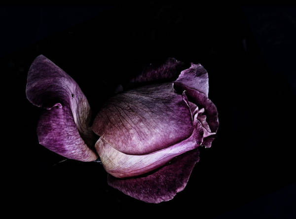 Wall Art - Photograph - Purple Mystic by Camille Lopez