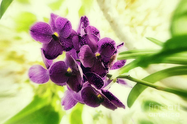 Photograph - Purple Orchid by Jeff Breiman