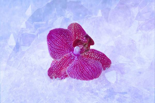 Mixed Media - Purple Orchid On White Haze by Shabby Chic and Vintage Art