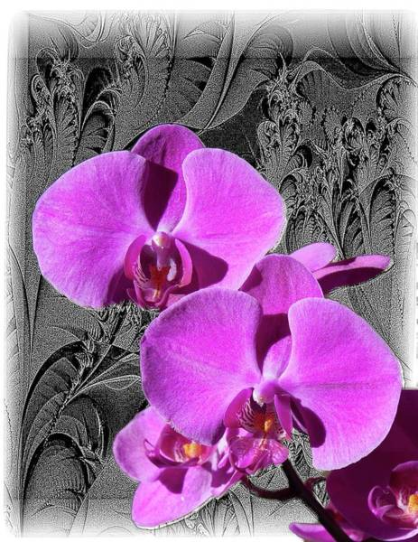 Digital Art - Purple Orchid by Rusty R Smith