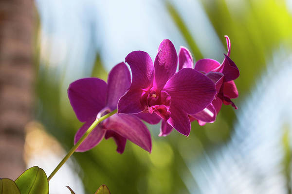 Photograph - Purple Orchids by Teresa Wilson