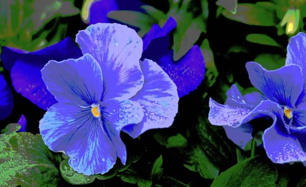 Photograph - Purple Pansy Posterized by E Faithe Lester