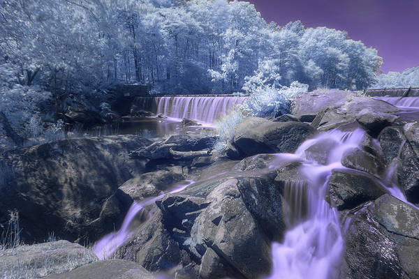 Photograph - Purple Passion by Brian Hale