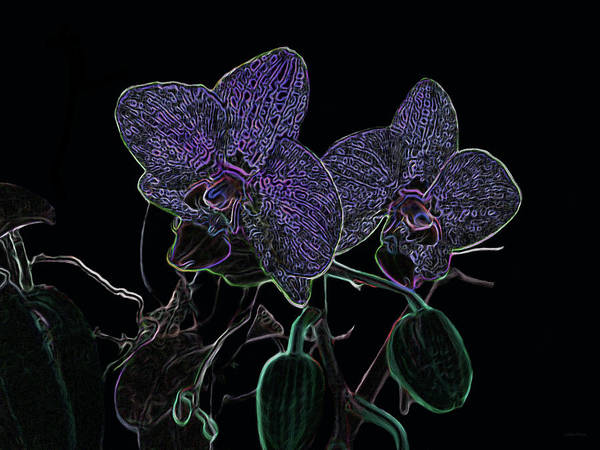 Mixed Media - Purple Passion Orchids In Neon by Lesa Fine