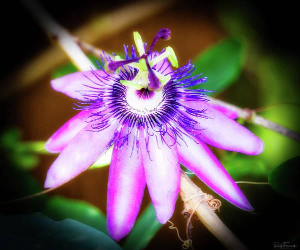 Photograph - Purple Passion by Rick Furmanek