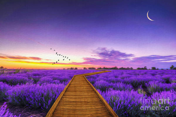 Fragrance Photograph - Purple Path by Laura D Young