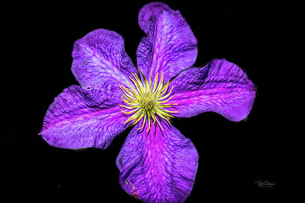 Photograph - Purple Petals  by Bill Posner