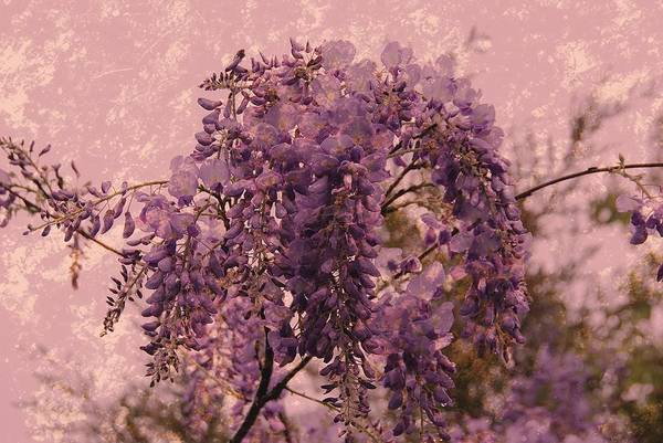 Purple Pleasures Art Print