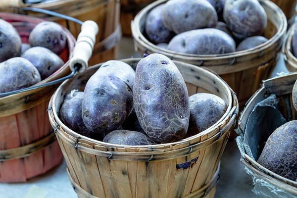 Photograph - Purple Potatoes by Teri Virbickis