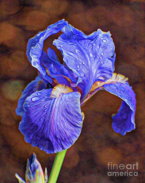 Photograph - Purple Rain by Vivian Martin