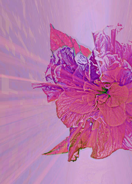 Wall Art - Photograph - Purple Rays Of Happiness by Rose  Hill