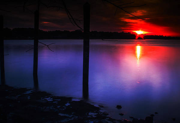 Photograph - Purple Reflections by Pete Federico