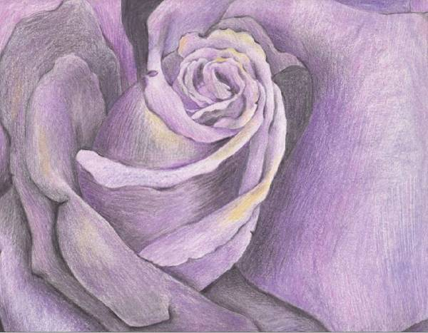 Vegan Drawing - Purple Rose by Melanie Sastria