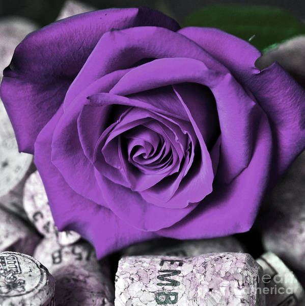 Photograph - Purple Rose On Cork by Silva Wischeropp