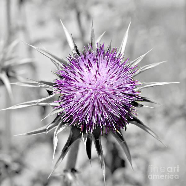 Photograph - Purple Scrub by Jenny Revitz Soper