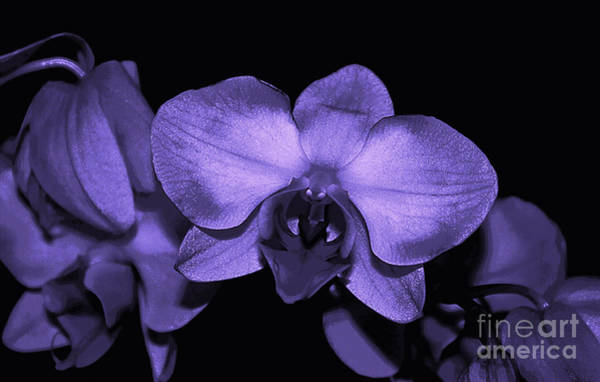 Processing Mixed Media - Purple Shades Of Orchids by Sherry Hallemeier
