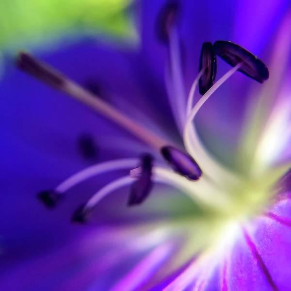 Photograph - Purple Starburst by Terri Hart-Ellis