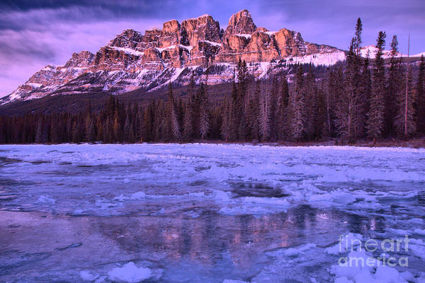 Photograph - Purple Sunset Reflections Along The Bow River by Adam Jewell