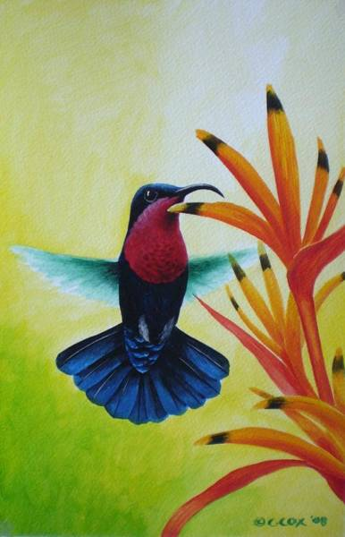 Painting - Purple-throated Carib And Bird Of Paradise by Christopher Cox