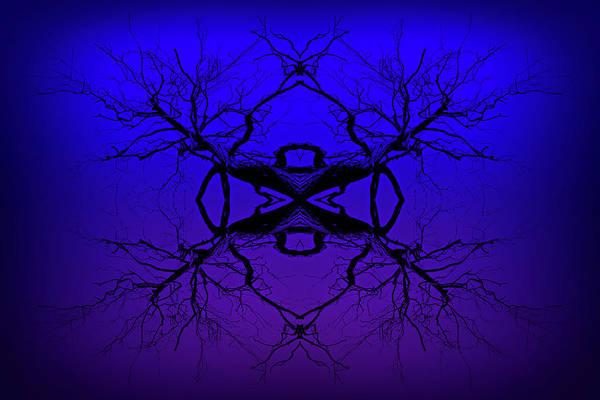 Photograph - Purple Tree Haze by John Williams