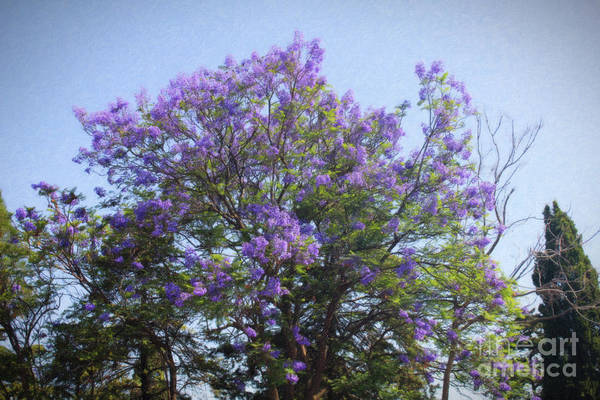 Digital Art - Purple Tree Life Greece by Donna L Munro