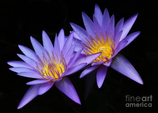 Photograph - Purple Twins by Sabrina L Ryan