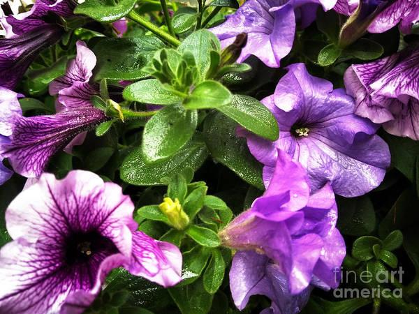 Photograph - Purple Vanity 2 by Robert Knight
