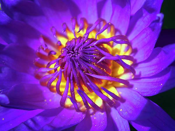 Floristry Photograph - Purple Water Lily Macro by Kaleidoscopik Photography