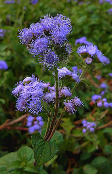 Mixed Media - Purple Wildflowers by Pamela Walton