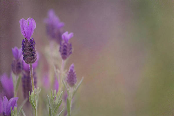Photograph - Purple Wings by Jacqui Boonstra