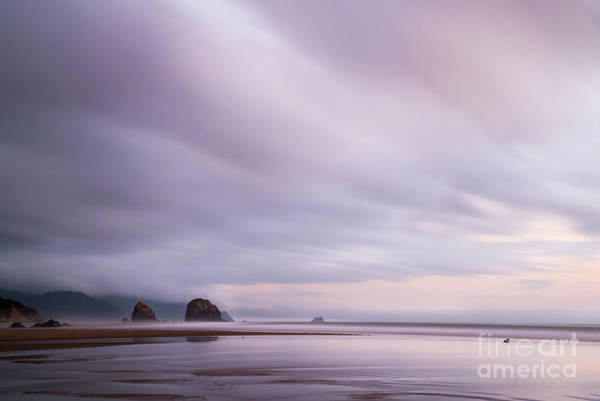 Photograph - Purple Wisp In The Morning by Paul Quinn