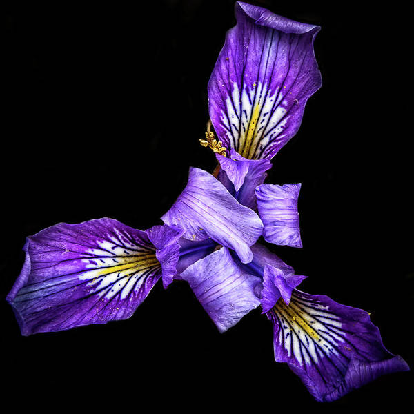 Wall Art - Photograph - Purpleness by Camille Lopez