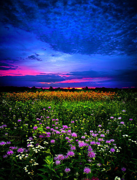 Natur Wall Art - Photograph - Purples by Phil Koch