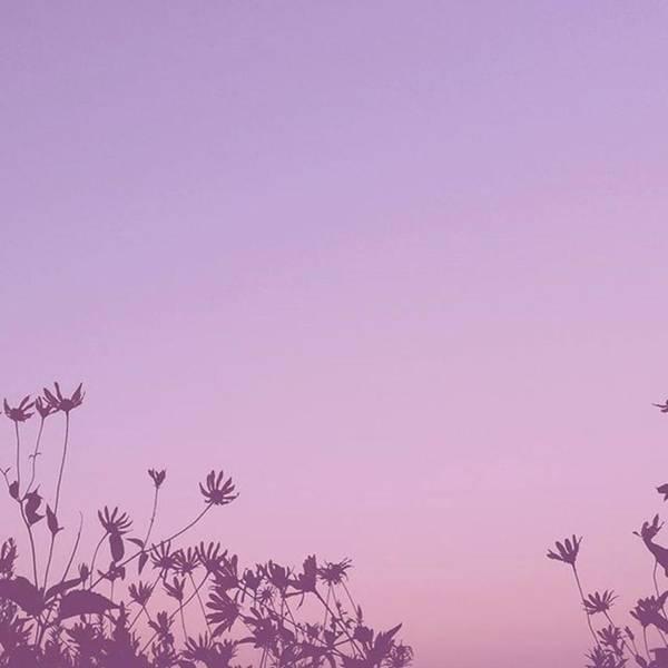 Photograph - #purpletuesday by Tricia Elliott