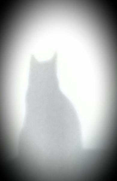 Photograph - Purr-fect Silhouette by Belinda Cox