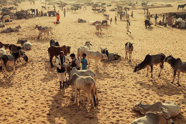 Photograph - Pushkar Mela Ground, Pushkar, India by Mahesh Balasubramanian