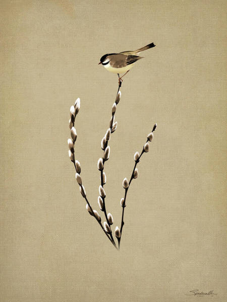 Wall Art - Digital Art - Pussy Willow And Chickadee by M Spadecaller