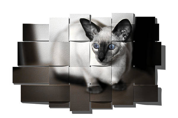 Photograph - Puzzled Kitty by Reynaldo Williams
