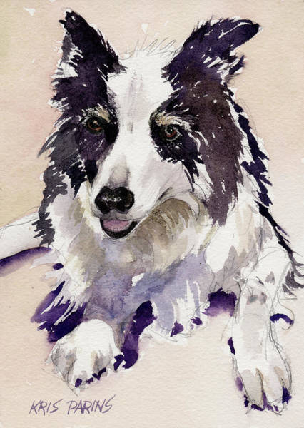Border Collie Painting - Jack by Kris Parins