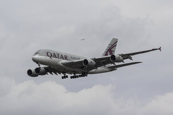 Wall Art - Photograph - Qatar Airlines Airbus And Seagull Escort by David Pyatt
