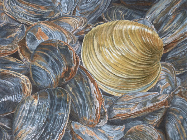Painting - Quahog On Clams by Dominic White