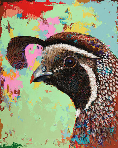 Wall Art - Painting - Quail by David Palmer
